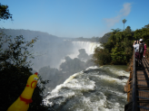 Pollito LOVED Iguazu