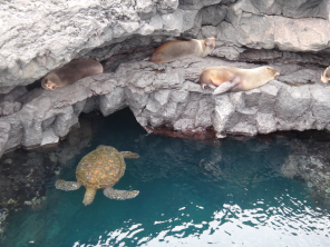 Turtles & sea lions