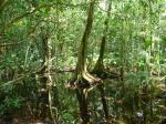 Corcovado National Park 1