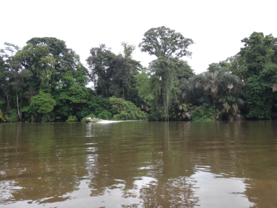 River Tortuguero NP 2